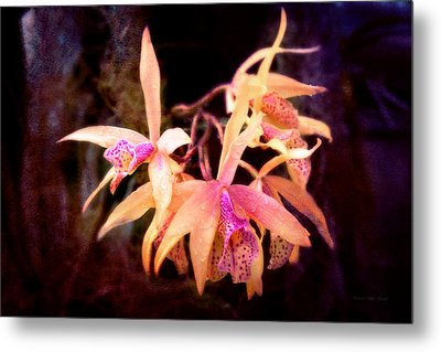 Flower - Orchid - Laelia - Midnight Passion Metal Print by Mike Savad