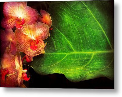 Flower - Orchid - Phalaenopsis Orchids At Rest Metal Print by Mike Savad