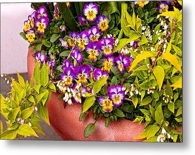 Flower - Pansy - Purple Posies  Metal Print by Mike Savad