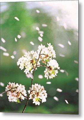 Flower Petals Floating In Air Metal Print