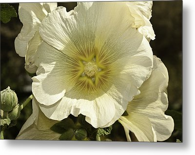 Flower Petals Of A White Flower Metal Print
