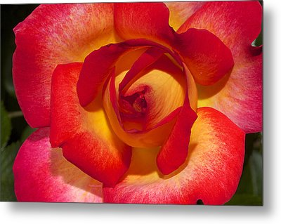 Flower Power Metal Print by Phyllis Denton
