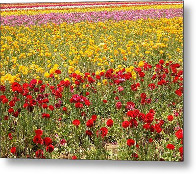Metal Print featuring the photograph Flower Rainbow by Nathan Rupert
