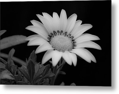 Flower  Metal Print by Ron White