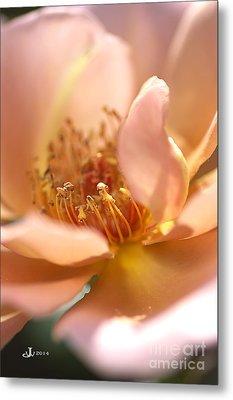 Flower-rose-soft Pink-gold Center Metal Print by Joy Watson