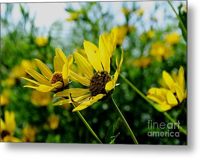 Flower - Sunning Sunflowers - Luther Fine Art Metal Print by Luther Fine Art