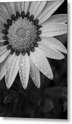 Flower Water Droplets Metal Print