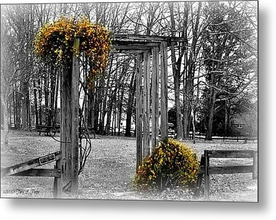 Metal Print featuring the photograph Flowering Archway by Tara Potts