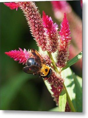 Flowering Bumble Bee Metal Print by B Wayne Mullins