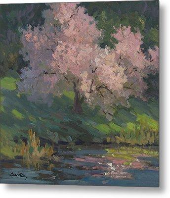 Flowering Cherry Metal Print by Diane McClary