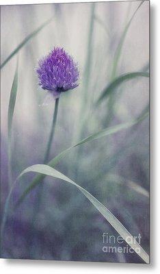 Flowering Chive Metal Print by Priska Wettstein