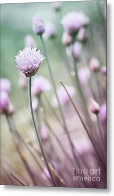Flowering Chives I Metal Print by Elena Elisseeva