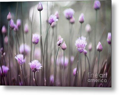 Flowering Chives Iv Metal Print by Elena Elisseeva