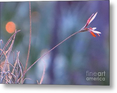 Metal Print featuring the photograph Flowering Moss by Joy Hardee