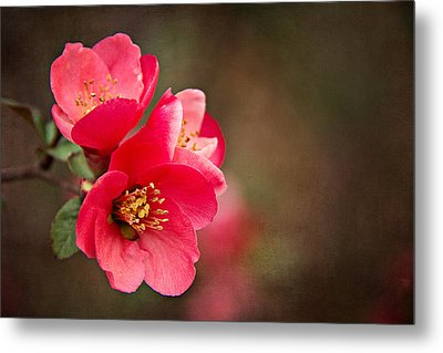 Metal Print featuring the digital art Flowering Quince by Lana Trussell