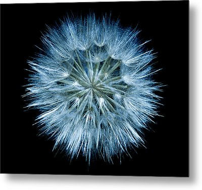 Metal Print featuring the photograph Flowering Weed 001 by Todd Soderstrom