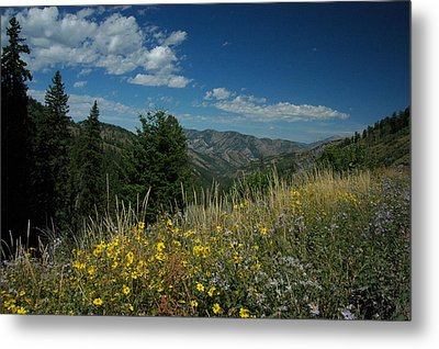 Flowering Yellowstone Metal Print by Larry Moloney