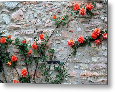 Metal Print featuring the photograph Flowers 5-assisi by Theresa Ramos-DuVon