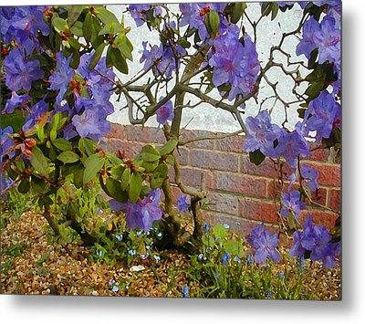 Flowers Against The Wall Metal Print by Lenore Senior and Constance Widen