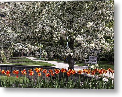 Flowers And Bench At Michigan State University  Metal Print by John McGraw