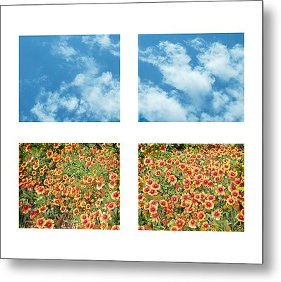 Flowers And Sky Metal Print by Ann Powell