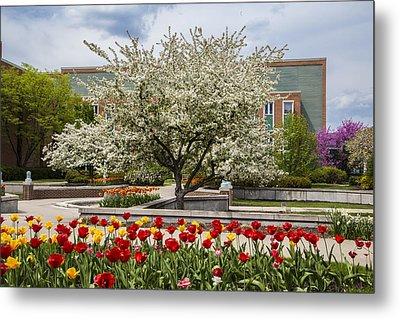 Flowers And Tree At Michigan State University  Metal Print