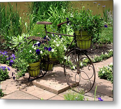 Flowers Home From The Market  Metal Print by Paul Cannon