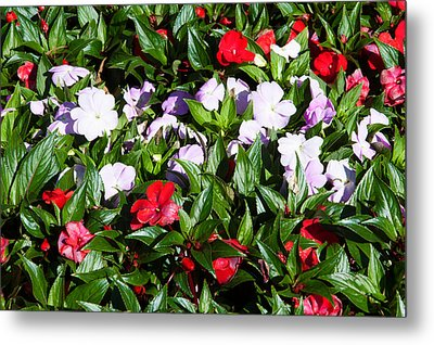Flowers In The Garden At Villa Metal Print by Panoramic Images