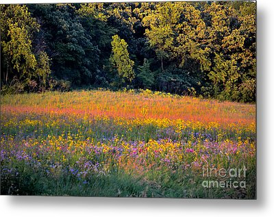 Flowers In The Meadow Metal Print by Deb Halloran