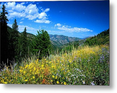 Flowers In Yellowstone Metal Print by Larry Moloney