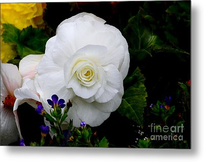 Flowers Metal Print by Ivete Basso Photography