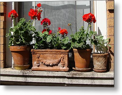 Metal Print featuring the photograph Flowers Of New York by Ira Shander