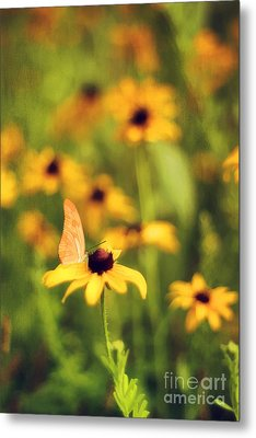Flowers Of Summer Metal Print by Darren Fisher