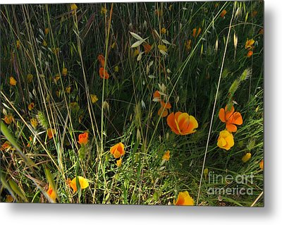 Flowers Of Wild  Metal Print by Tim Rice