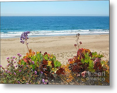 Metal Print featuring the photograph Flowers On Pismo Beach by Debra Thompson