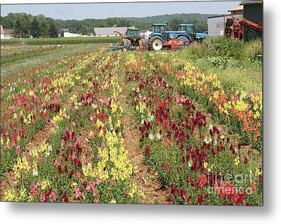 Metal Print featuring the photograph Flowers On The Farm-1 by Steven Spak
