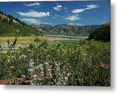 Flowers On The Palisades Resevoir Idaho Metal Print by Larry Moloney
