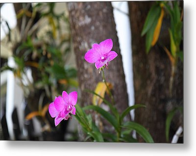 Flowers - Panviman Chiang Mai Spa And Resort - Chiang Mai Thailand - 01131 Metal Print by DC Photographer