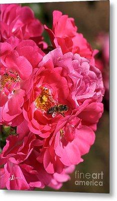Flowers-roses-pink-bee Metal Print by Joy Watson