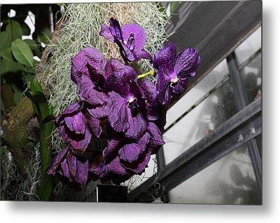 Flowers - Us Botanic Garden - 011313 Metal Print by DC Photographer