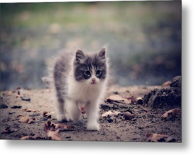 Fluffy Cuteness Metal Print