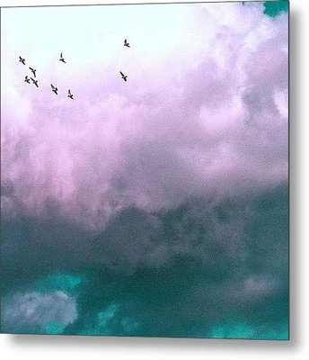 Fluffy Flight Metal Print