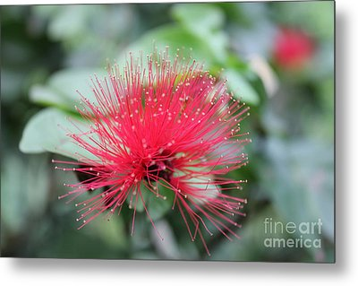 Metal Print featuring the photograph Fluffy Pink Flower by Sergey Lukashin