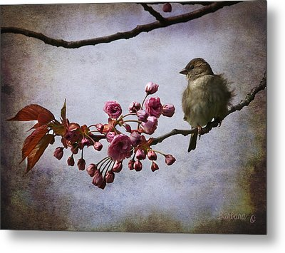 Fluffy Sparrow  Metal Print by Barbara Orenya