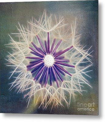 Fluffy Sun - 9bt2a Metal Print by Variance Collections