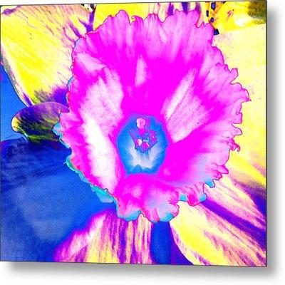Fluorescent Daffodil  Metal Print by Shawna Rowe