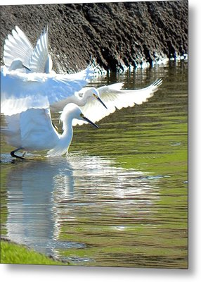 Metal Print featuring the photograph Flurry by Deb Halloran