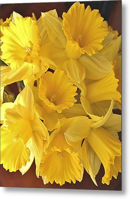 Metal Print featuring the photograph Flurry Of Daffodils by Diane Alexander