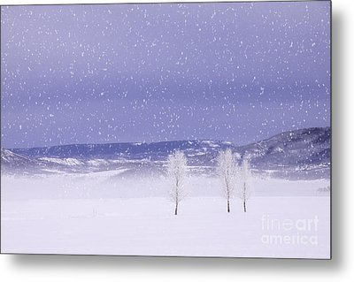 Metal Print featuring the photograph Flurry Trio by Kristal Kraft
