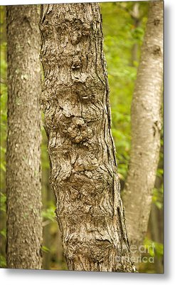 Fluted Tree Metal Print by Carol Lynn Coronios